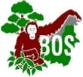 borneo_orang_survival_fdn