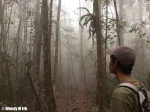 TORP assistant monitoring orangutans in the smoke